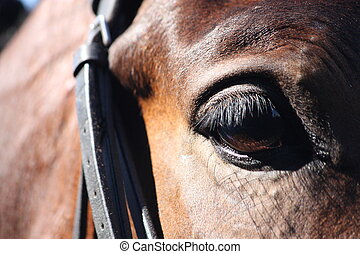 Close up of horse eye with bridle - Close up of brown horse...