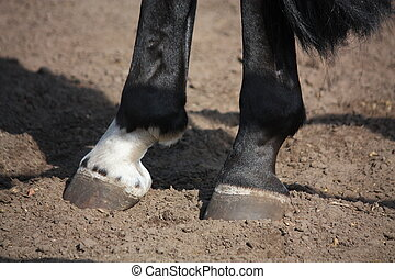 Close up of horse hoof standing on the ground - Close up of ...