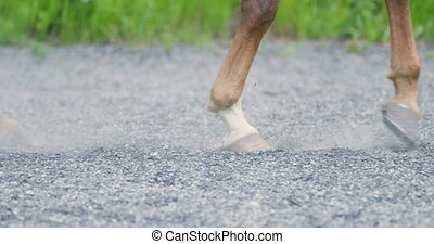 Close-up of horse hooves walking on sandy ground at ranch or...