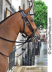 horse in city