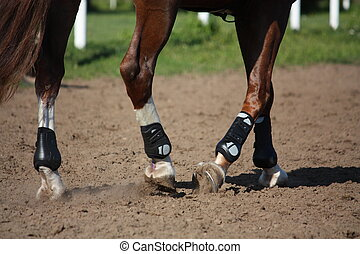Close up of horse legs with protection boots during riding...