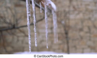 Close-up of icicles