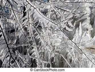 Close-up of Icicles on tree branches