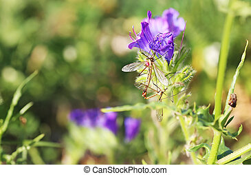 insects sitting on blooming purple flowers in the nature - macro photography