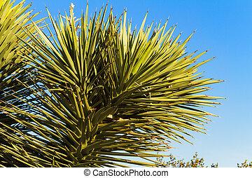Close up of Joshua Tree, Nevada
