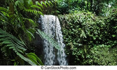Close up of jungle fern plants in front of tropical waterfall