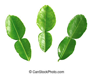 close up of kaffir lime leaves on white