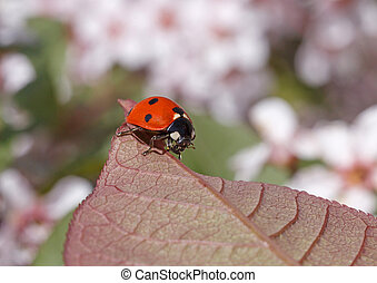 ladybug sitting on leaf of tree