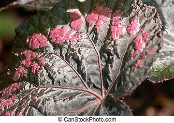 Close up of leaf pattern of decorative plant.