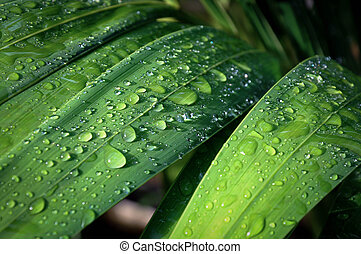 Close up of leaf with dew drops