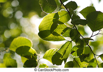 Close up of leaves on a tree