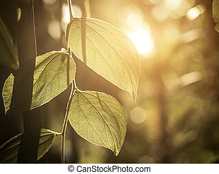 Close up of leaves with sunlight on blur background.