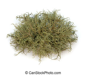 Lichen - Close-up of Lichen (Usnea) on a white background.
