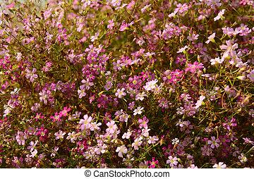 Close up of little violet flower