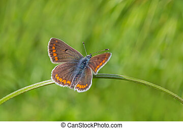 butterfly sitting on blade in green grass