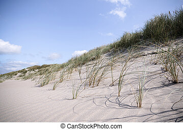 Close-up of lyme grass in danish nature on a beach shore in...