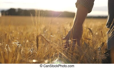 Close up of male hand moving over wheat growing on the plantation. Young man walking through the barley field and gently touching golden ears of crop. Sunlight at background. Rear view Slow motion