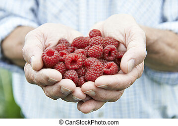 Close Up Of Man Holding Freshly Picked Raspberries
