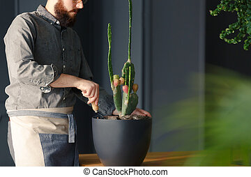 Close-up of man with gardening hobby taking care of cactus at home