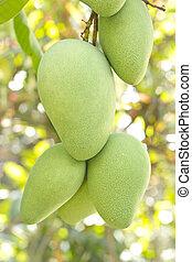 Close-up of mango on tree