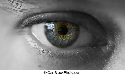 eye - close up of mans eye