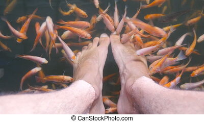 Close up of many tropical fishes eating dead skin and...