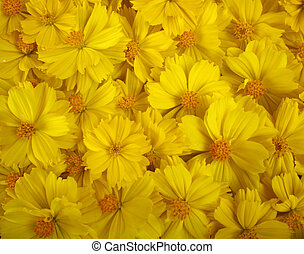 close-up of marigold flower