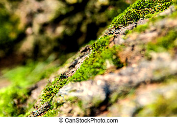 Close up of Moss on tree bark closeup, selective focus. Nature life background with a lot of space for text