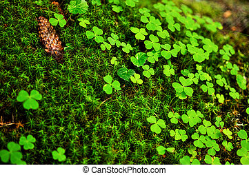 Close-up of moss sphagnum and clovers - Close-up of green...