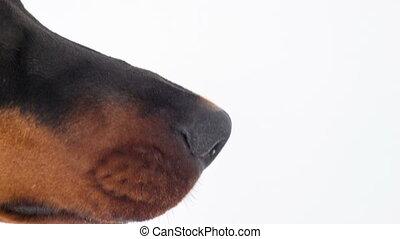 Close-up of muzzle of joyful dog - Playful humour. Close-up...