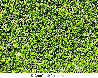 Close up of natural grass texture