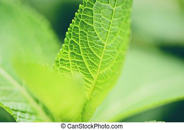 Close up of nature green leaves in the garden with soft focus and blur leaf tree background