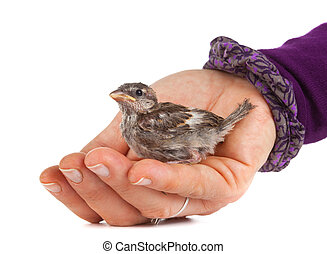 Close up of nice little sparrow in a hand
