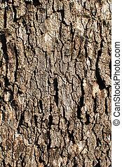 Oak Tree Background