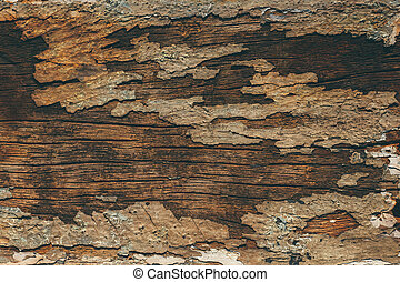 Close up of Old wood background.
