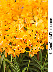 Close up of Orange orchid flowers with green leaf
