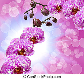 Close up of orchid flower