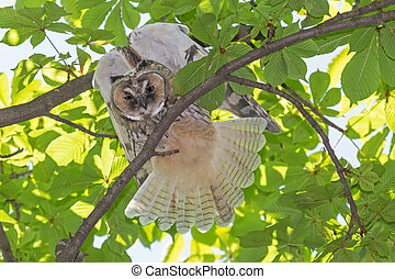 owl on branch of tree