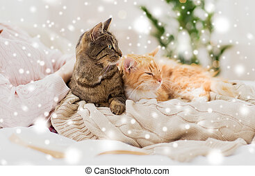 close up of owner with cats in bed over snow