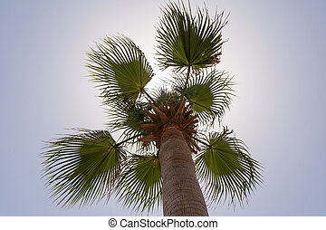 close up of palm tree against blue sky
