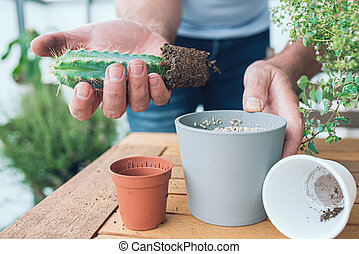 close-up of person repotting cactus at wooden table on porch