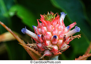 Close up of pineapple flowers
