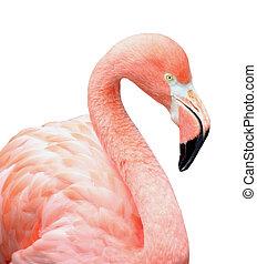 Close up of pink flamingo bird isolated on white background.