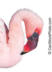 Close-up of pink flamingo