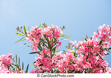 Close-up of pink flowers in a sunny day. Romantic and beautiful plant.