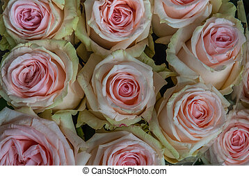 close up of pink roses on the market.