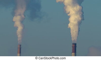 close-up of pipe plant from which there is a thick smoke