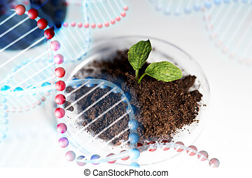close up of plant and soil in lab - science, biology,...