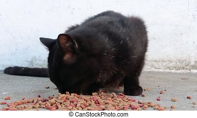 Close up of poor stray black cat eating dry food directly...
