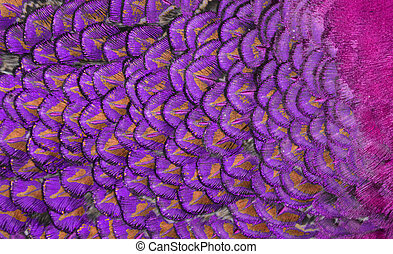 Close-up of Purple Feathers